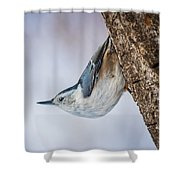 Hanging Nuthatch Shower Curtain