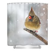 Hanging Out In The Snow Shower Curtain