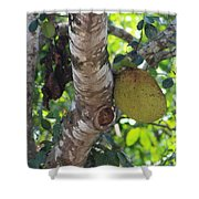 Hanging Rock Shower Curtain