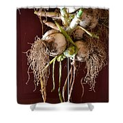 Hanging Roots Shower Curtain