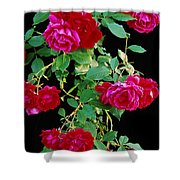 Hanging Roses 2593 Shower Curtain