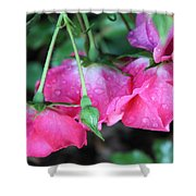 Hanging Roses Shower Curtain