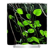 Hanging Vines Shower Curtain
