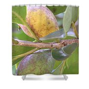 Haole Guava Shower Curtain