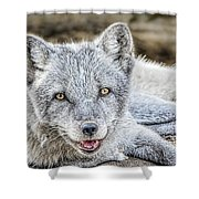 Happy Arctic Fox Shower Curtain