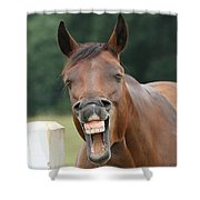 Happy Birthday Smiling Horse Shower Curtain