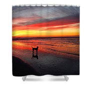 Happy Dog At Sunset Shower Curtain