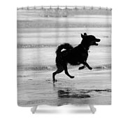 Happy Dog Black And White Shower Curtain