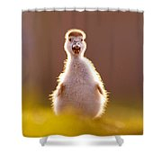 Happy Easter - Cute Baby Gosling Shower Curtain