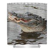 Happy Florida Gator Shower Curtain