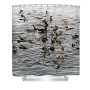 Happy Harbour Seals Shower Curtain