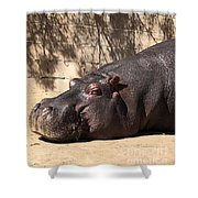 Happy Hippo Shower Curtain by Laurie Lundquist