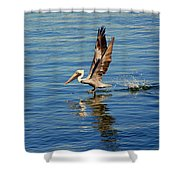 Happy Landing Pelican Shower Curtain