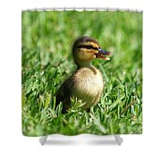Happy Lil Duck Shower Curtain