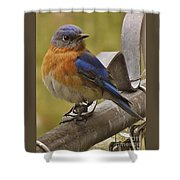 Happy New Year Male Bluebird Shower Curtain