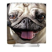 Happy Pug Shower Curtain