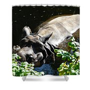 Happy Rhino Shower Curtain