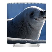 Happy Seal Shower Curtain