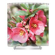 Happy Spring Flowering Quince Card And Poster Shower Curtain
