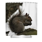 Happy Squirrel Shower Curtain