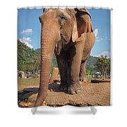 Happy Thai Elephant In Chiang Mai Shower Curtain