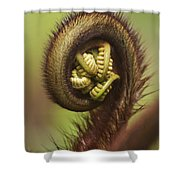 Hapuu Fern Frond Shoot Shower Curtain