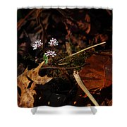 Harbinger Of Spring In Lost Valley Shower Curtain