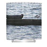 Harbor Seal Hangin With A Friend Shower Curtain