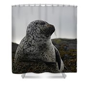 Harbor Seal In Stormy Weather Shower Curtain