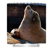 Harbor Seal In The Sun Shower Curtain