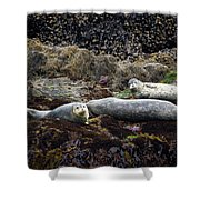 Harbor Seals Basking - Oregon Coast Shower Curtain