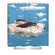 Harbor Seals On Clouds Of Ice Shower Curtain