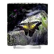 Hard Landing--clipper Butterfly Shower Curtain