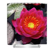 Hardy  Day Water Lily Shower Curtain