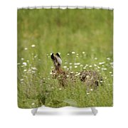 Hare On The Run Shower Curtain