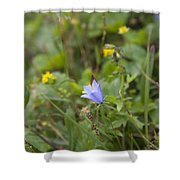 Harebell - Campanula Rotundifolia - Flower Shower Curtain