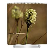 Hare's-tail Cottongrass 1 Shower Curtain