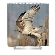 Harlans Hawk Launch Shower Curtain