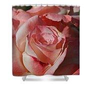 Harlekin Rose Shower Curtain