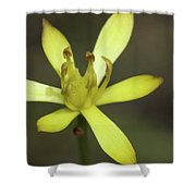 Harper's Beauty #2 Shower Curtain