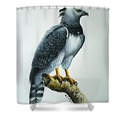 Harpy Eagle Shower Curtain