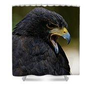 Harris Hawk - Call Of The Wild Shower Curtain by Sue Harper