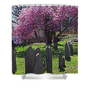 Harris Street Cemetery Cherry Blossom Tree Marblehead Ma 2 Shower Curtain