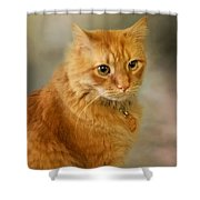 Harry Shower Curtain