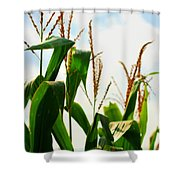 Harvest Corn Stalks Shower Curtain