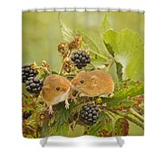 Harvest Mice On Blackberry Shower Curtain