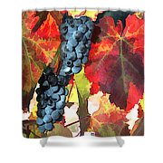Harvest Time Grapes And Leaves Shower Curtain