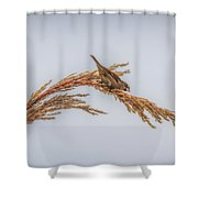 Harvest Time IIi Shower Curtain