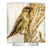Harvest Time Iv Shower Curtain