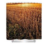 Harvest Twilight Shower Curtain